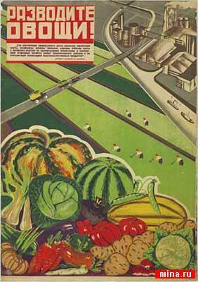 Разводите овощи!
